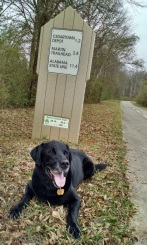 Scout loved the Silver Comet Trail