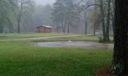Ducks swimming in the yard