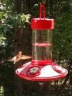 Bossy hummingbird