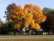 The tree we saw earlier in the week has become even more colorful
