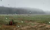 Fog, cows and turkeys. Our view early this morning.
