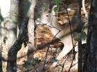 Deer visiting this morning