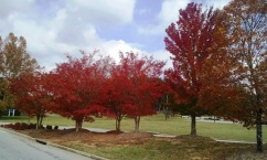 Fall foliage in SC