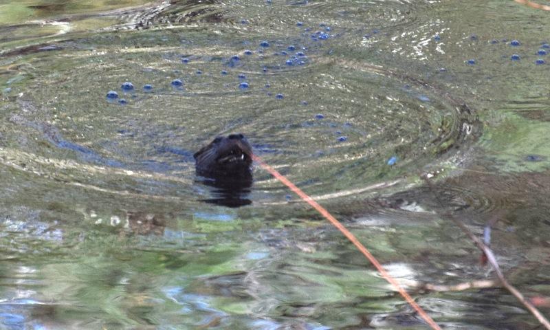 Duck X 6,Otter