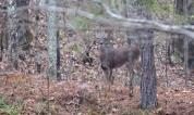 Deer on the dam
