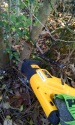Using our reciprocating saw on the privet hedge