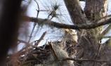 Uncooperative eagle