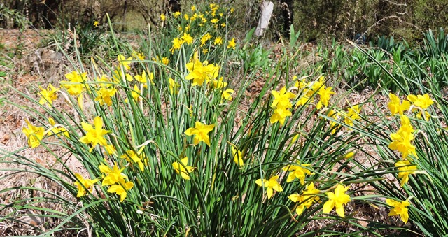 Springing Spring