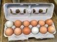 Our construction coordinator gave us a dozen yard eggs