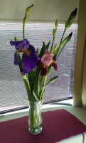 Irises brought from home