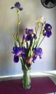 Irises on 4-13