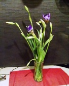 Second set of irises 1