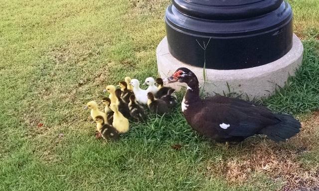 New Family In TheNeighborhood