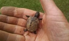 Baby turtle found in old garden