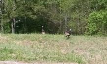 Uppity Turkeys