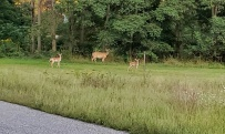 We saw this young family on our Tuesday evening walk