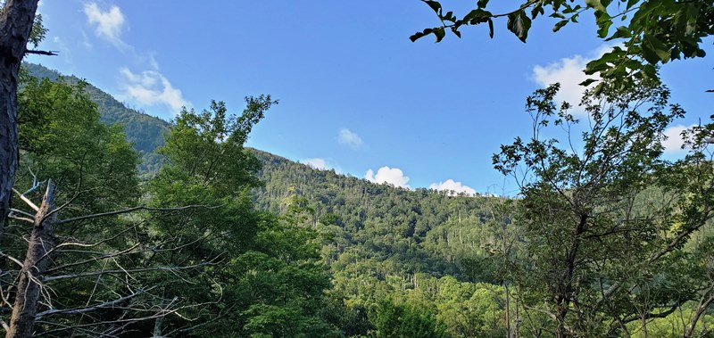 First Full Day Back In TheSmokies