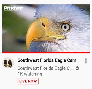 SWFL Eagle Cam